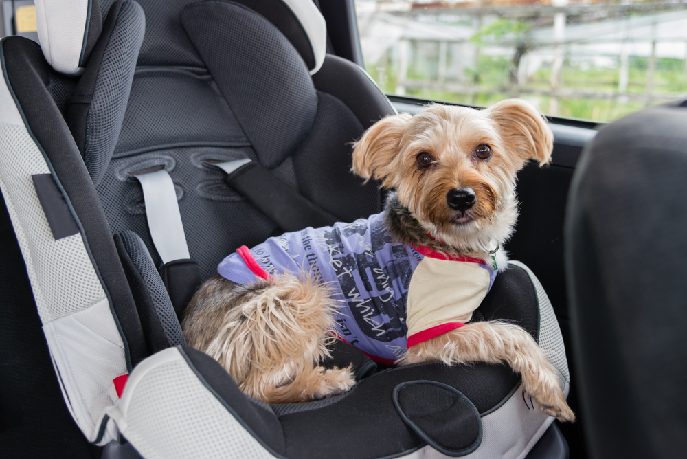 How to Travel Safely with Your Pet