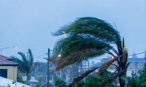 Palm trees in city blowing in hurricane winds